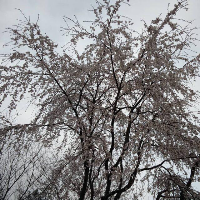 遊学 森 ひろしま の ひろしま遊学の森 広島市森林公園